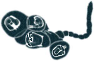 Illustration av Ika Österblad.