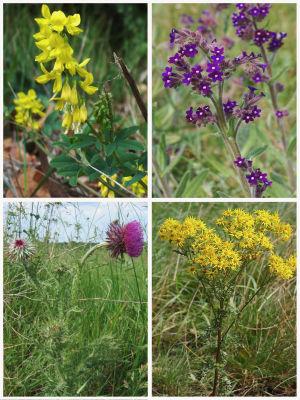 Violetteja ja keltaisia kukkia