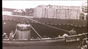 Mustavalkoinen kuva: pienempi kalastusvene täynnä kalamiehiä vinssaamassa isoa kalaverkkoa suuremman aluksen kannelle.
