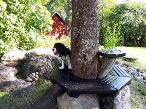 En bänk runt ett träd. Mutterbänk. Lasse, Askola.