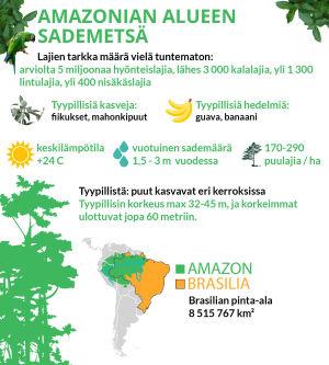 infografiikkaa sademetsistä
