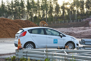 En räv står utanpå en vit bil med yle-logo och biter på en antenn.