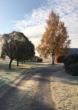 Frost över väg och träd en tidig morgon.