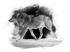 Stiliserad helbild av en varg i profil. Fotograferad i Etseri djurpark.