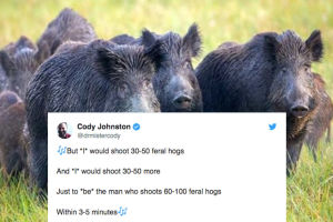 Memen 30-50 feral hogs.