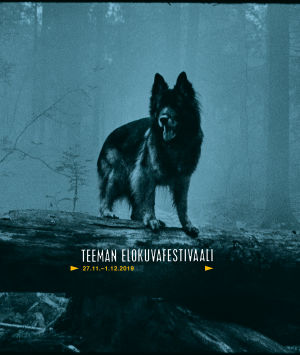 Koira metsässä kaatuneen, lahon puunrungon päällä. Teeman elokuvafestivaali 2019 -taustakuva.