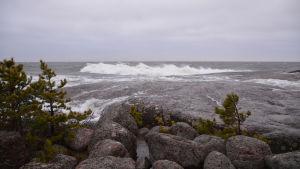 En strand med träd och stora släta stenar. Stora vågor slår mot stenarna och himlen är grå.