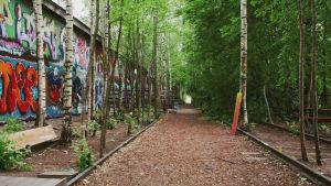 Rautatiekiskot, joiden lomasta kasvaa puita, sekä graffitimaalauksien peittämä seinä.