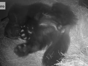 Urosahma Matti nukkuu pesälaatikossa.
