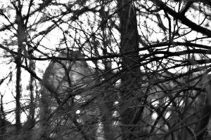 Kala grenar framför en byggnad en vinterdag.