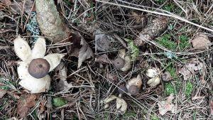 gamla svampar