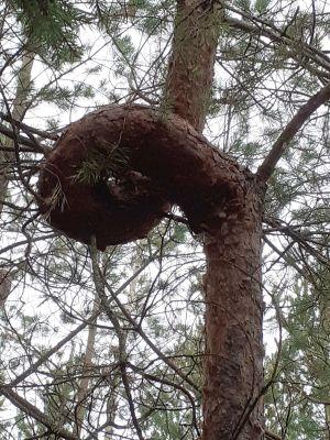 Ett krokigt träd