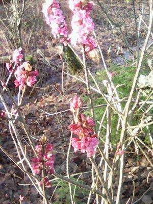 En ljusöd blomma i skogen