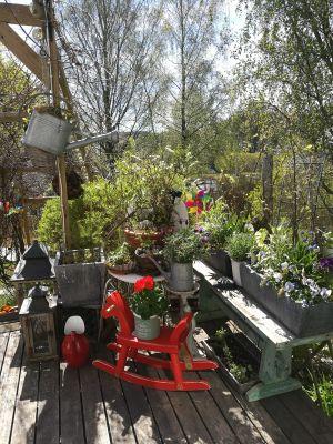 Trädgård, Kati Kovalainen, Salo