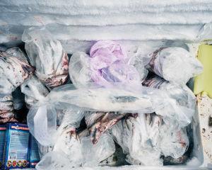 Makrilli on muovipussissa Maretariumin pakastimessa. Sen alla on kalanperkeitä.
