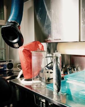 Kala lasipurkissa Hanna Laakkosen työpisteellä. Katossa on iso putki, joka imee mahdolliset hajut huoneesta.