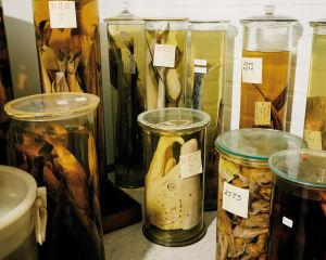 Kuvassa näkyy useita lasipurkkeja, joissa on kaloja. Kuvan keskellä on suuri valkoinen sammen pää. Purkissa lukee lapulla: Numero 2.