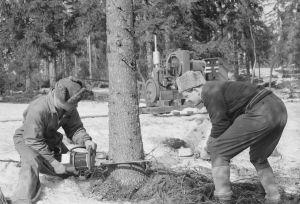Mustavalkoinen kuva metsätyöntekijöistä.