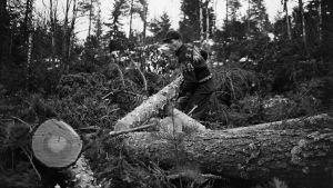 Mustavalkoinen kuva metsätyöntekijästä.