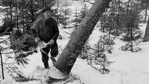 Mustavalkoinen kuva metsästä.