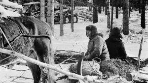 Mustavalkoinen kuva, jossa metsätyömies ja hevonen.