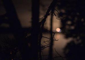 Ljus som speglas över vatten i mörkret, i förgrunden grenar