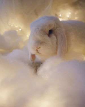 En vit kanin sitter i ett moln av bomullsvadd, i bakgrunden belysning