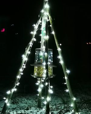 Julbelysning vid ett fågelmatningsställe