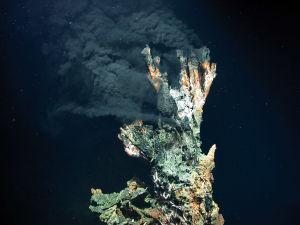 """""""Svarta skorstenar"""", heta djuphavskällor i Atlanten."""