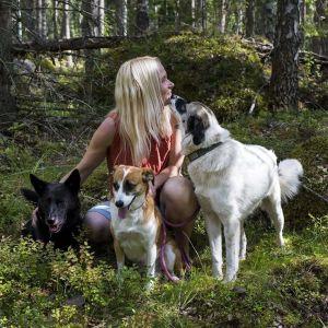 Elisa Aaltola kesäisessä metsässä kolmen koiransa kanssa.
