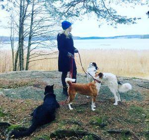 Elisa Aaltola rantakalliolla kävelyllä koirien kanssa.