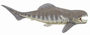 Konstnärens vision av en Dunkleosteus-fisk.