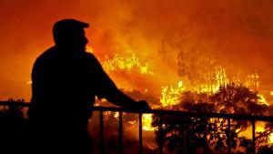 En man står och tittar över eldhavet under en skogsbrand i Algarve, Portugal, 2012.