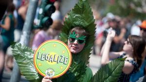 Legaliseringen av cannabis väcker känslor. Både för och emot.