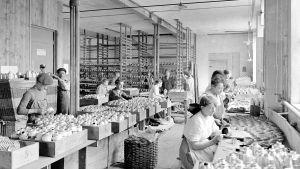 Kvinnor jobbar i en fabrik som tillverkar gasmasker i Genève i Schweiz.