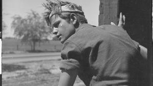 Nuori junapummi tavaravaunussa katselee ohikiitävää maisemaa, 1940