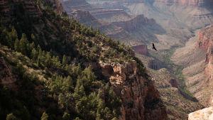 Kuusiosainen luontodokumenttisarja tutustuu Pohjois-Amerikan kansallispuistoihin.