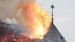 Notre Dame brinner, Paris den 15 april 2019.