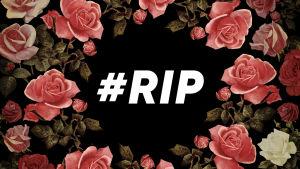 Kuvassa ruusuja ja keskellä teksti #RIP