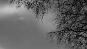 puiden oksia ja taivasta