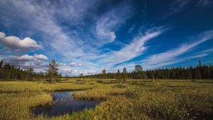 Suomaisema Pallas-Yllästunturin kansallispuistossa