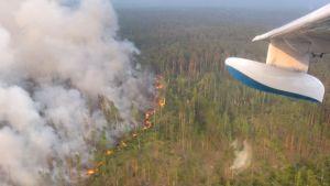 Bild på en av skogsbränderna som härjade i Sibirien sommaren 2019, tagen ur ett flygplan.