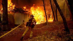Kalifornisk brandman med lång slang närmar sig brinnande hus.