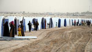 Norska flyktingrådet varnar för en humanitär katastrof bland tiotusentals fallujabor som flydde till tältläger i öknen