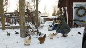 En kvinna böjer sig ner och matar tre hönor som kommer gående mot henne. Det är vinter och snö på marken.