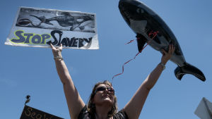 Kvinna demonstrerar mot Sea World i Miami
