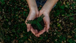 Kädet pitävät multaista kasvia.