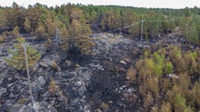 Område i skogen som brunnit.