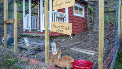 Kaninerna på Lönneberga husdjursgård i Sjundeå.