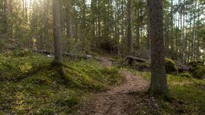 Polkureitti Kintulammen retkeily- ja luonnonsuojelualueella.